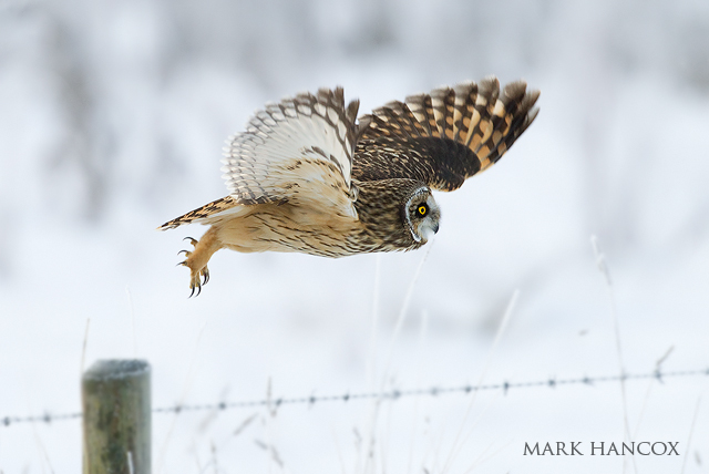 Mark Hancox Bird Photogrpahy